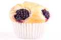 Blackberry muffin Stock Photography