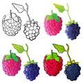 Blackberry & Raspberry Stock Image