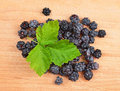 Blackberry (rubus) Stock Images