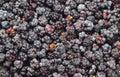Blackberry rubus close up many fresh as nature background Royalty Free Stock Photos