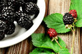 Blackberrys Royalty Free Stock Photos