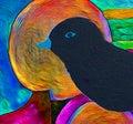 Blackbird - The colors of birds