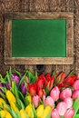 Blackboard with colorful tulip flowers and space for your text Royalty Free Stock Image