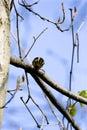 Blackburnian Warbler  700834 Royalty Free Stock Photo