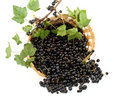Blackcurrant Stock Image