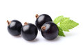 Blackcurrant with leaf Royalty Free Stock Photo