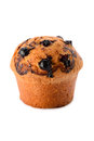 Blackcurrant muffin bread and bakery single fresh on white background Royalty Free Stock Photo