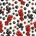 Blackcurrant and redcurrant pattern seamless vector illustrations of ripe berries Royalty Free Stock Images