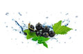 Blackcurrant splash Royalty Free Stock Photo
