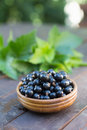Blackcurrants in bowl of fresh black currants on wooden table Royalty Free Stock Images