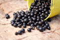 Blackcurrants falling on stone background Stock Photography