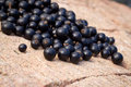 Blackcurrants falling on stone background Stock Image