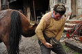 Blacksmith shoeing a horse lupeni april unidentified farrier such type of smithery techniques are very rare in romania on april in Stock Photography