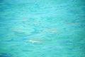 Blacktip reef shark Stock Photos