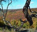 Blackwater Falls State Park autumn colors Royalty Free Stock Photo