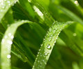 Blade of Grass and Water Droplet Royalty Free Stock Photo