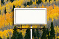 Blank Billboard Sign with  Fall Aspen Tree Forest Royalty Free Stock Photo
