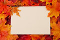 Blank Card With Fall Leaves Fo...