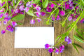 Blank card with flowers violet wild spring and white sample text over rustic wooden background texture surface horizontal close up Stock Images