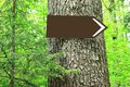 Blank direction sign on tree in forest Royalty Free Stock Images
