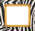 Blank golden frame  with zebra texture Royalty Free Stock Photo