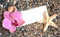 Blank paper on the beach sand with seashells and orchid Royalty Free Stock Images