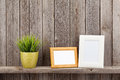 Blank photo frames and plant Royalty Free Stock Photo