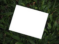 Blank photos and green background Royalty Free Stock Photo