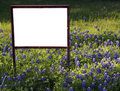 Blank Sign in Bluebonnets Royalty Free Stock Image
