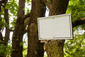 Blank sign indicating hanging on the tree trunk Royalty Free Stock Photo