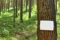 Blank sign on a tree Royalty Free Stock Photo