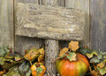 Blank weathered wood sign with autumn border of leaves and pumpkins Royalty Free Stock Photo