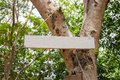 Blank wooden board on green tree. Summer park sign mockup. Empty sign on wooden board in sunny summer garden. Royalty Free Stock Photo
