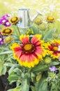 Blanket flowers on flowersbed in garden yellow Stock Photography