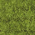 Blanket of moss Stock Image