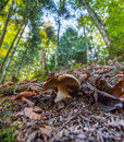 Blausee Nature Park - Mushroom II Royalty Free Stock Photo