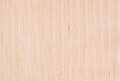 Bleached oak wood texture natural Royalty Free Stock Photography