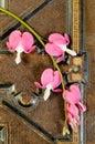 Bleeding Heart Flowers On Vintage Book Royalty Free Stock Photo