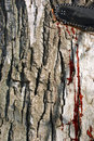 Bleeding tree Stock Image