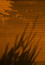 Blinds and tree shadow Royalty Free Stock Photo