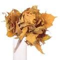Bloem gemaakte ââof de herfstbladeren Royalty-vrije Stock Afbeeldingen