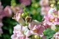 Blomma och bi Royaltyfri Foto