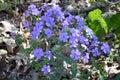 Blommor i solen Arkivfoto