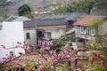 Blomning och hus Royaltyfri Bild