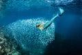Blonde beautiful Mermaid diver underwater Royalty Free Stock Photo