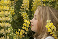 Blonde little girl smelling yellow wildflowers Stock Photography