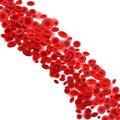 Blood cells flow