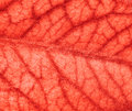 Blood vessels of the brain Stock Image
