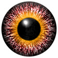 Bloody pink-eye of alien with yellow ring around the pupil Royalty Free Stock Photo