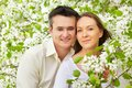 In bloom portrait of young couple looking at camera among apple trees Royalty Free Stock Photos